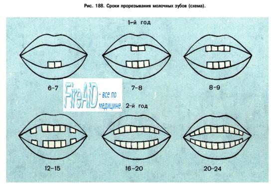 мама пока не зубастиков… фото как прорезываются зубки