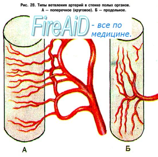 Гидростатическое давление в капиляре. Шунтирующие сосуды ( шунтирование ).