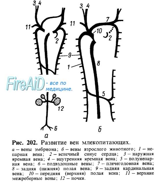 Как проходят вены на ногах схема
