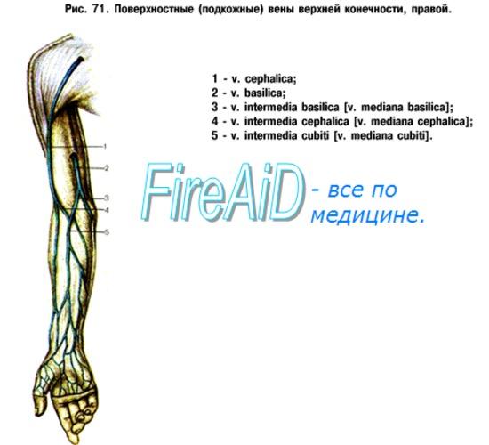 Анатомия: Вены верхней конечности. Поверхностные ( подкожные ) и ...