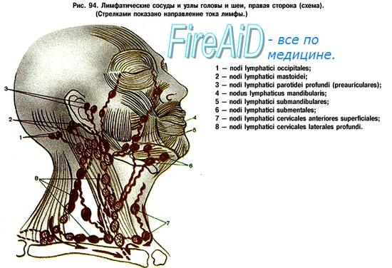 шейных лимфатических узлов