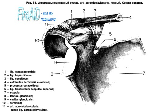 артрит акромиально ключичного сустава