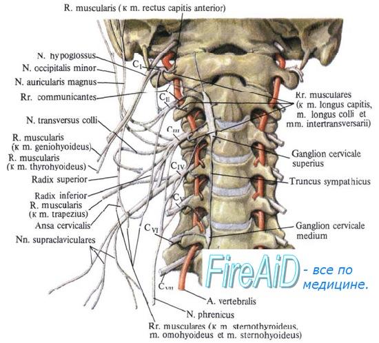 Блокада затылочного нерва при кластерной головной боли