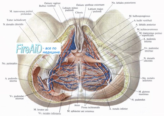 смотреть фото половых органов