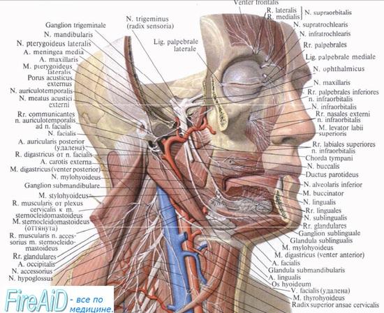ганглиопатия крылонебного узла - синдром Слюдера