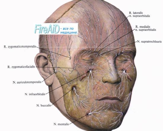 Анатомия: Первая ветвь тройничного нерва. Глазной нерв, n ...