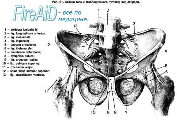 Анатомия женских половых органов. Женский таз.