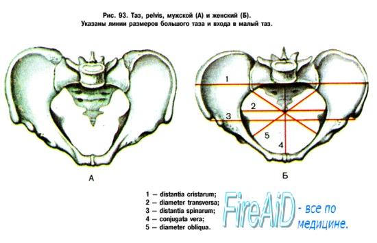 Измерение формы лобкового угла. Измерение косых размеров таза.