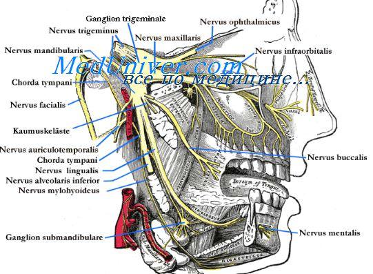 тройничный нерв - нижний альвеолярный нерв