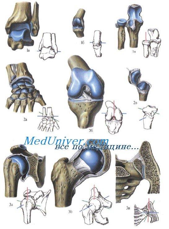 Анатомия виды суставов по количеству осей дисплазия коленных суставов у детей лечение