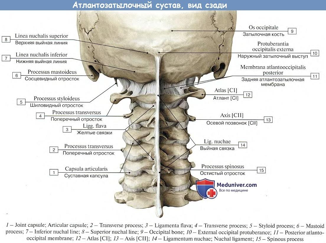 Суставы между 1 и 2 шейными позвонками лекарства для суставов доброген