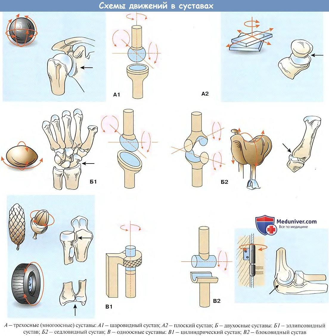 К блоковидным суставам относится почему болит все тело и суставы