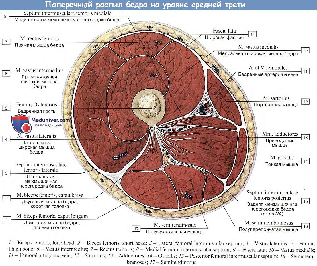 Hogyan kezeli a longidáz petefészek cisztáját - Összhang