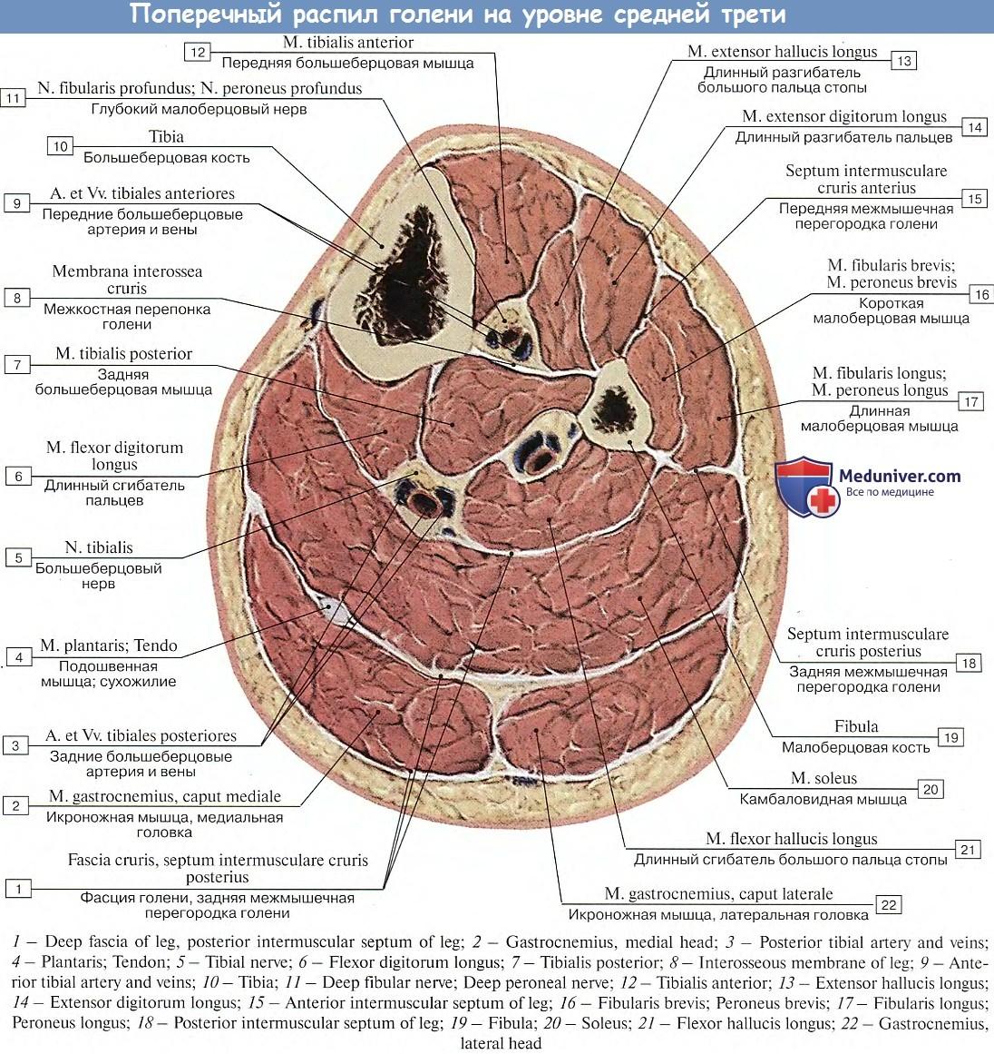 Longidáz amikor a fibrózis a prosztatában)