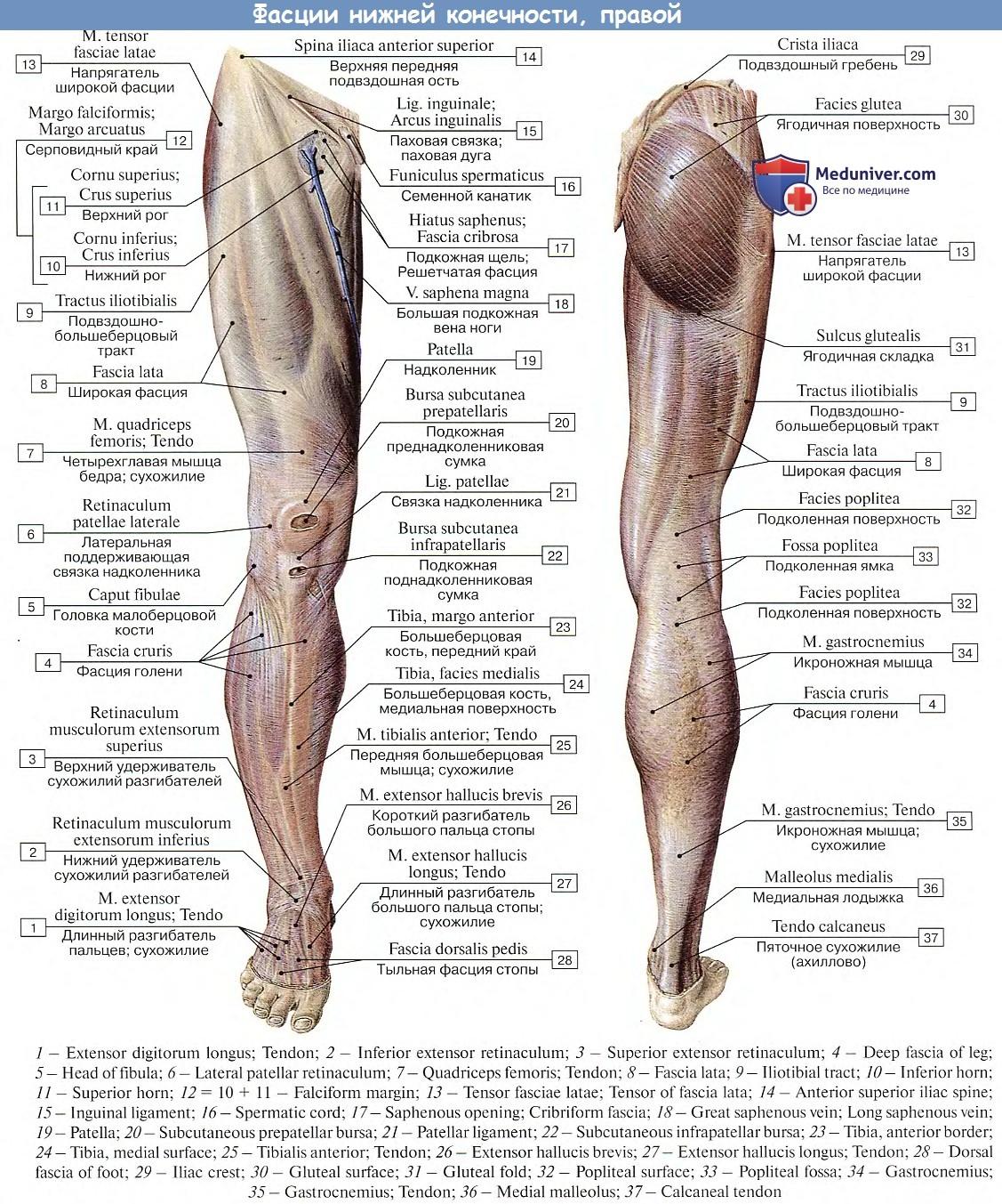 A prosztata fibrózis meszesedéssel