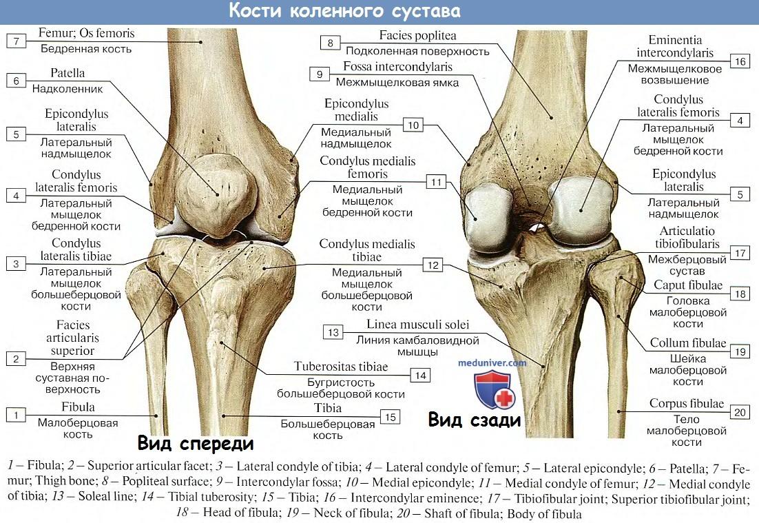 может ли болезнь суставов отразится на половых органах