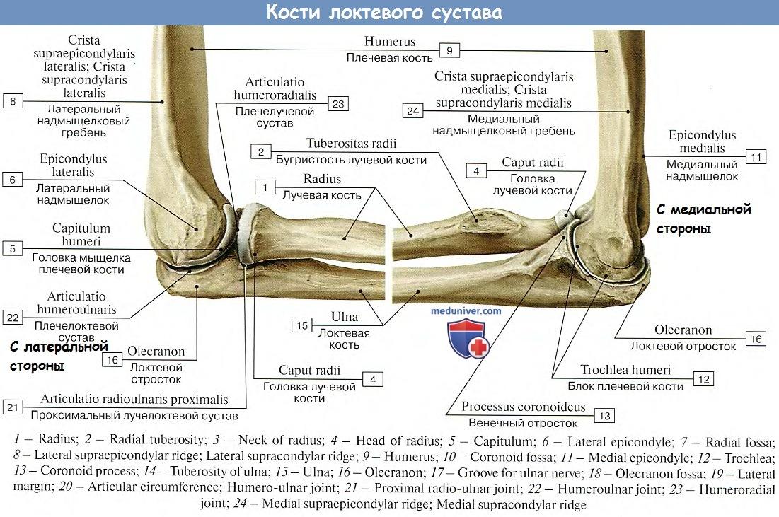 Возможные движения луче-логтевого сустава замена тазобедренного сустава стоимость курган