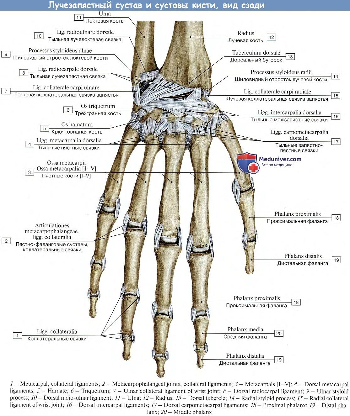 артроскопия коленного сустава в туле цена