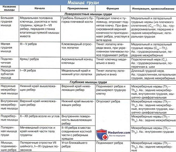 Анатомия: Мышцы груди, места прикрепления, функции, кровоснабжение в таблице