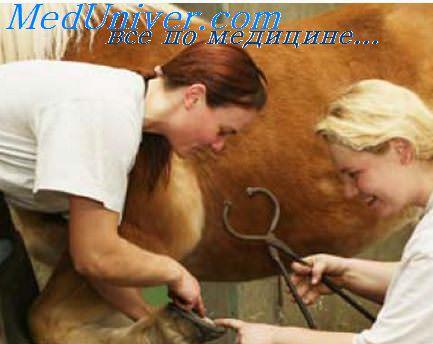 рана и ветеринар