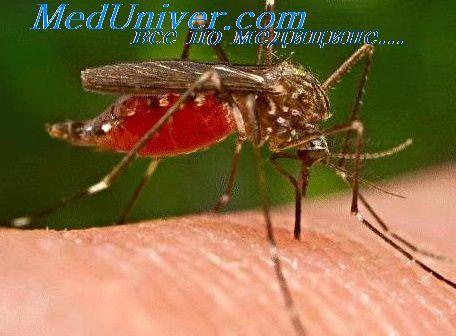 анемия при малярии