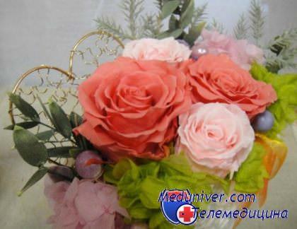 Цветы фатсия уход