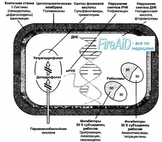 Механизмы действия противомикробных средств - их мишени