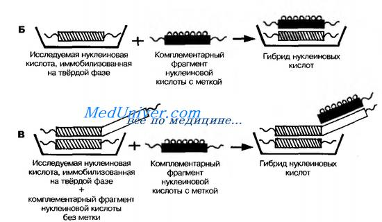 Реакция пцр микробиология 19