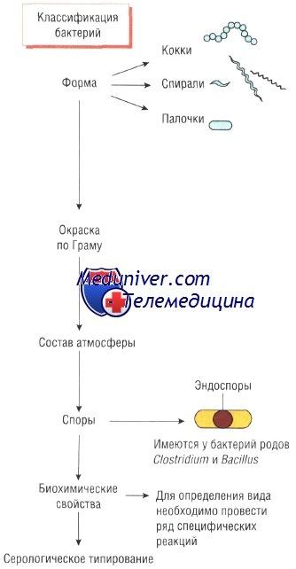 Принципы классификации бактерий