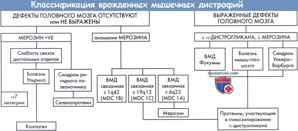 Классификация врожденных мышечных дистрофий