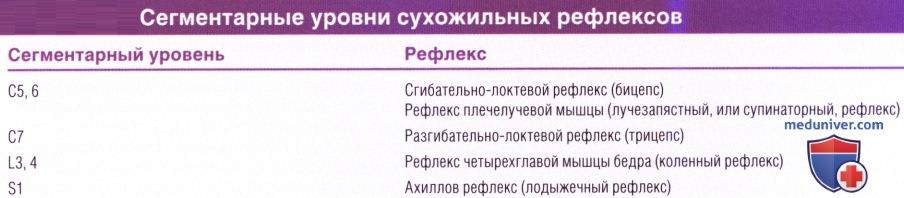 Сегментарные уровни сухожильных рефлексов