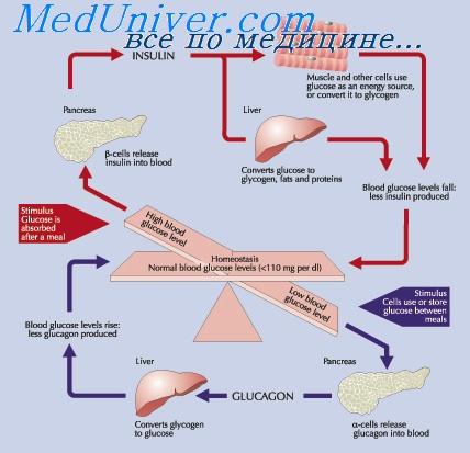 инсулинорезистентность при спкя