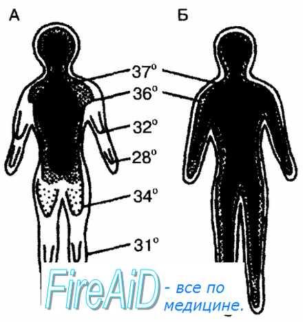 Температура оболочки тела у человека thumbnail