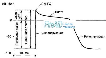 Реполяризация миокарда что это такое