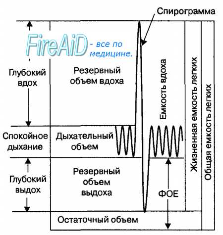 Фазы дыхания. Объем легкого ( легких ). Частота дыхания. Глубина дыхания. Легочные объемы воздуха. Дыхательный объем.