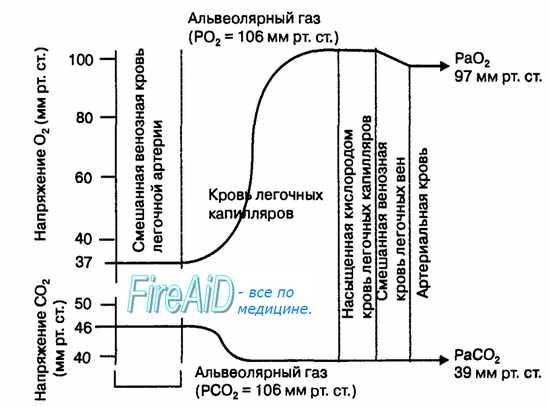 Напряжение газов в крови капилляров легких. Скорость диффузии кислорода и углекислого газа в легких. Уравнение Фика.