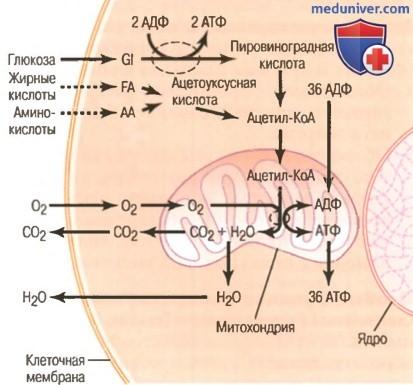 Синтез АТФ