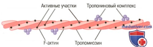 мышечное сокращение