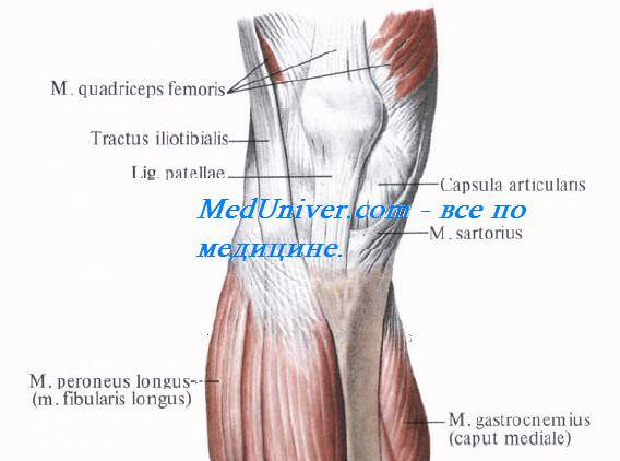 Слои передней области коленного сустава. Кожа, фасции передней области коленного сустава