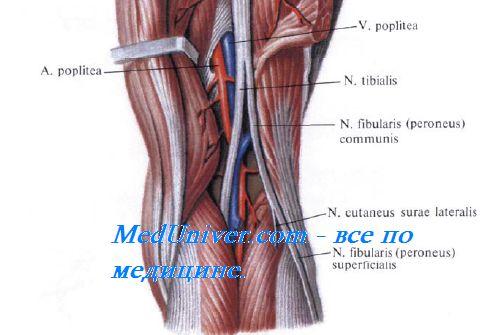 лечение артроза коленного сустава в киеве форум