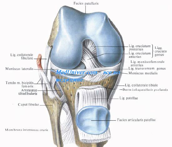 Связки укрепляющие коленный сустав. Связки коленного сустава. Коллатеральные связки коленного сустава