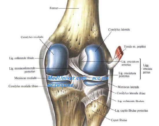 Изображение - Медиальная коллатеральная связка коленного сустава 148