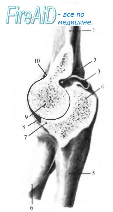 Изображение - Топография локтевого сустава 78