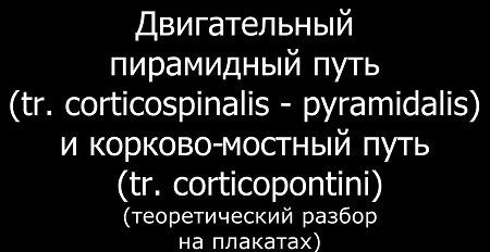 Видео схема, центры двигательного пирамидного пути (tr. corticospinalis - pyramidalis)