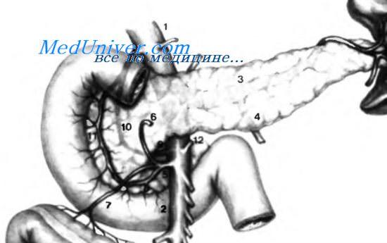 Вены в поджелудочной железе thumbnail