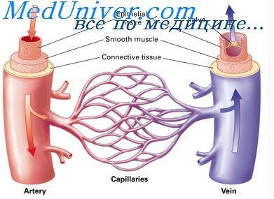 izmenenie-obraza-zhizni-pri-arterialnoy-gipertenzii