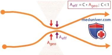 Применение теоремы сохранения массы к случаям сужения поперечного сечения потока в эхокардиографии (ЭхоКГ)