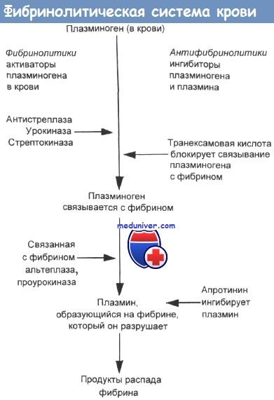 Фибринолитическая система крови