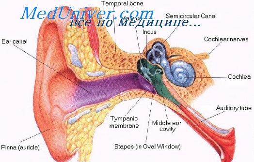 Лечение инфекций глаз. Физиология уха