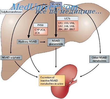 metabolismo del calcio y fosforo cura
